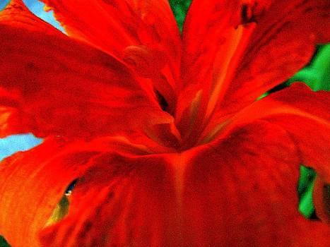 Lily by Mark Malitz