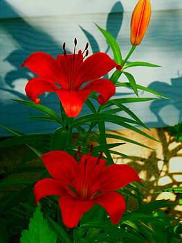 Lillies by Julie Grace
