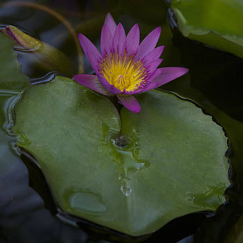 Lilly and Lotus by Brian Governale