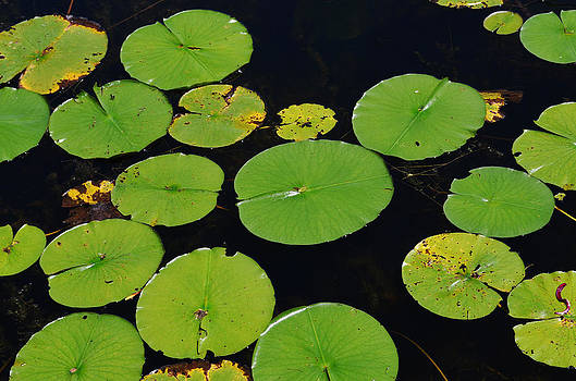Lilly Pads by Xcape Photography