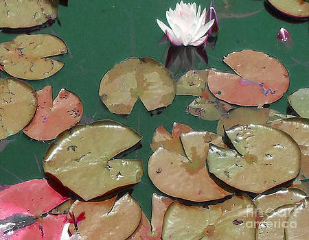 Lilly Pond Insect 1 by Bruce Tubman