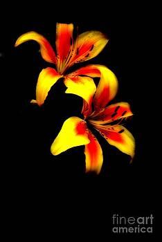 Lily Dance by Alex Blaha