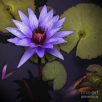 Floral- Water Lily by Feryal Faye Berber