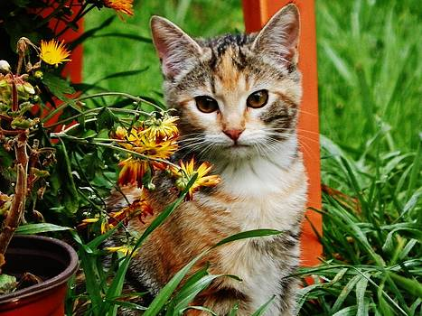 LILY Garden Cat by VLee Watson