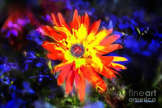 Gunter Nezhoda - Lily in vivd colors