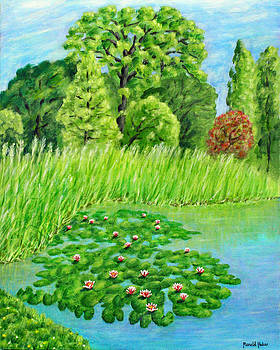 Lily Pond At Grappenhall Walled Garden by Ronald Haber