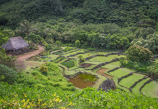 Roger Mullenhour - Limahuli Garden Kauai