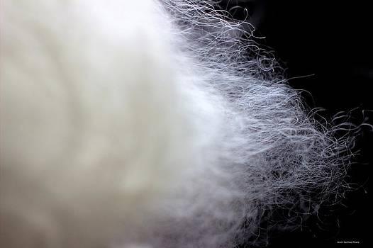 Lincoln Sheep Wool Fibers by Scott Carlton