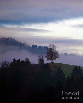 Susanne Van Hulst - Linden Berry Tree and Fog 2