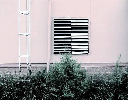 Linear by Sarah Leer
