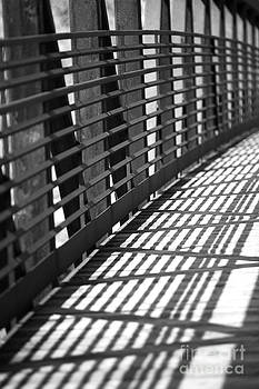 Lines in the Light by Casey Hanson