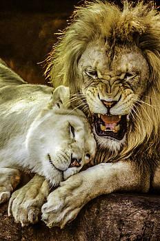 Lion attitudes. by Brian R Tolbert