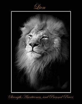 Lion Black And White by Marty Maynard