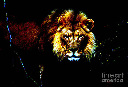 Nick Gustafson - Lion Eyes