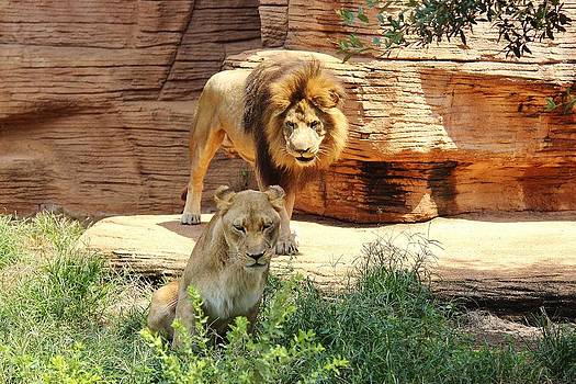Paulette Thomas - Lion Love