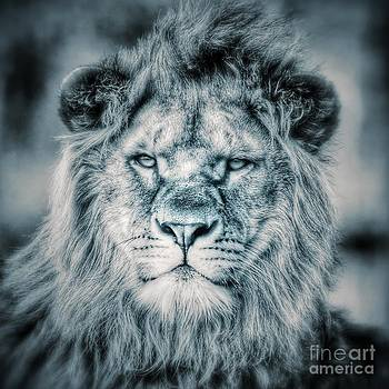 Nick  Biemans - Lion portrait in monochrome II