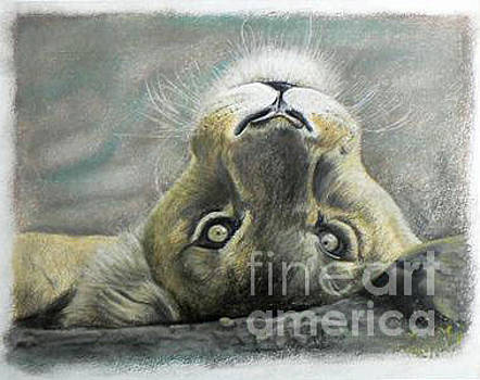 Jeanette Louw - Lioness