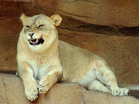 Rosanne Jordan - Lioness Smile