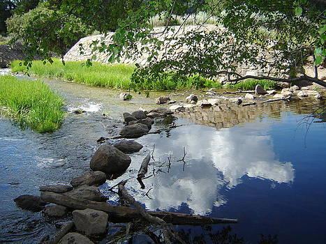 Liquid Reflection by Donna Jackson
