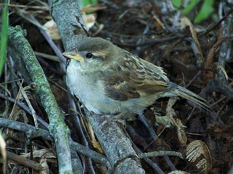 Little Bird Waiting by Linda Francis