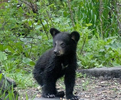 Little black bear  by Jody Benolken
