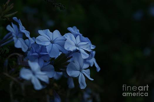 Little Blue by Crissy Boss