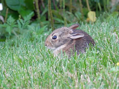 Little Bunny Wabbit 1 by Pema Hou
