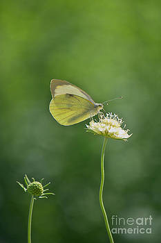 Angela Doelling AD DESIGN Photo and PhotoArt - Little butterfly