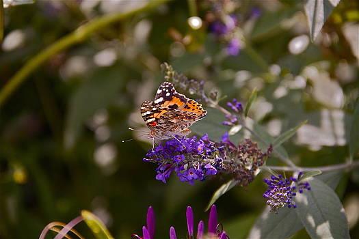 Little Butterfly by Chris Burke