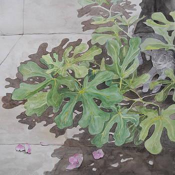 Little Fig  Ano Syros by Jan Eckardt Butler