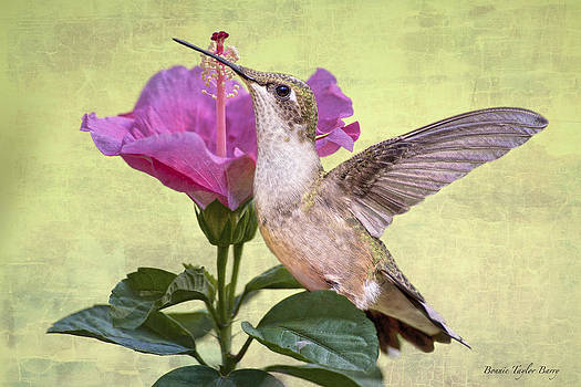 Little Miss Hummer by Bonnie Barry