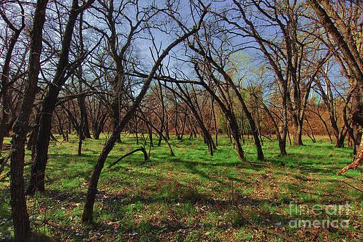 Little oaks by David Taylor