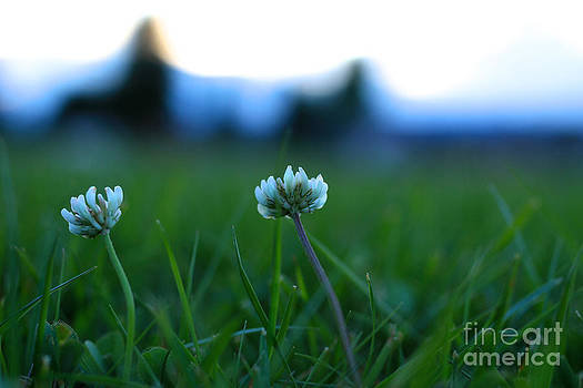 Little Ones in a Meadow by Jason Gallant