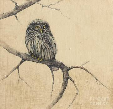Lori  McNee - Little Owl