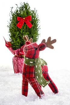 Edward Fielding - Little Reindeer Christmas Card