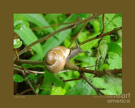Little Snail by Patricia Overmoyer