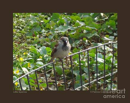Little Sparrow by Patricia Overmoyer