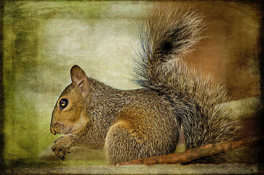 Little Squirrel by Kathy Jennings