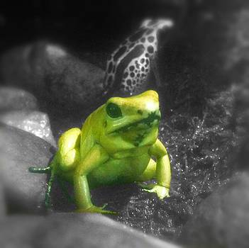 Little Yellow Frog by Amber Davenport