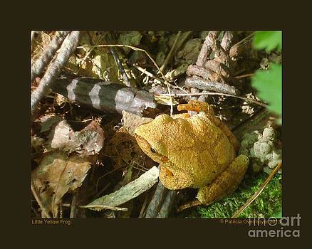 Little Yellow Frog by Patricia Overmoyer