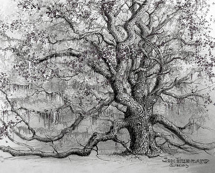 Jim Hubbard - Live Oak