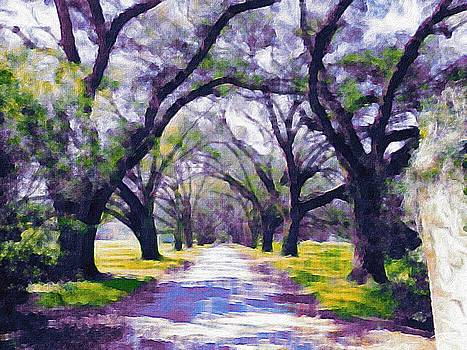 Live oak tree entry by Patricia Greer
