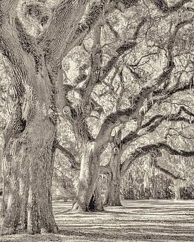 Live Oaks-1 by Bill LITTELL