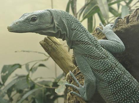 Lizard by Amber Davenport