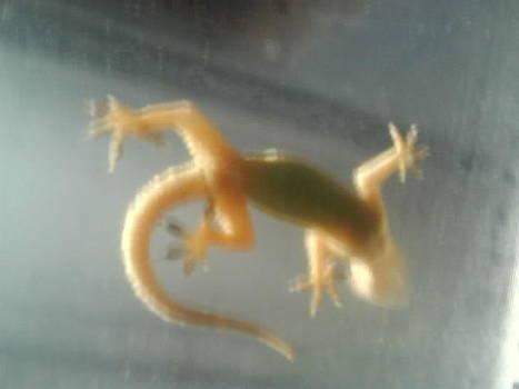 Lizard by Aparna Suriaraj