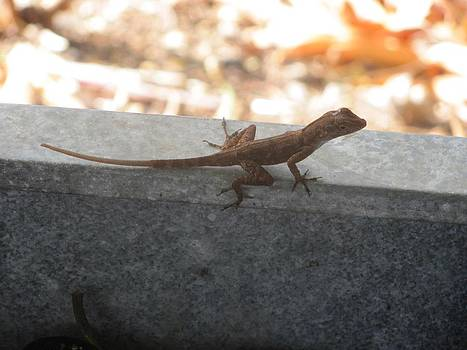Lizard in Puerto Rico by Daisy Morales