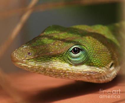 Lizard by Vicki Genna