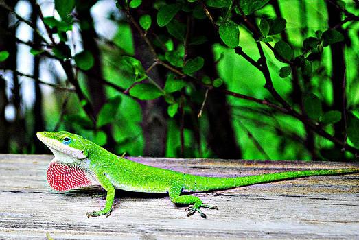 Local Lizard by Stephanie Grooms