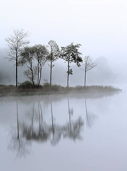Loch Ard trees in the mist by Grant Glendinning