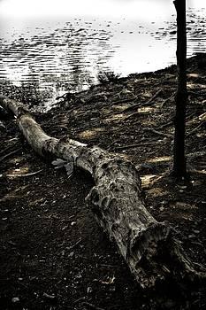 Log of Deadwood by Edward Khutoretskiy